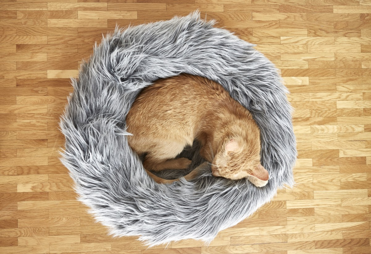 FluffyCat Bed