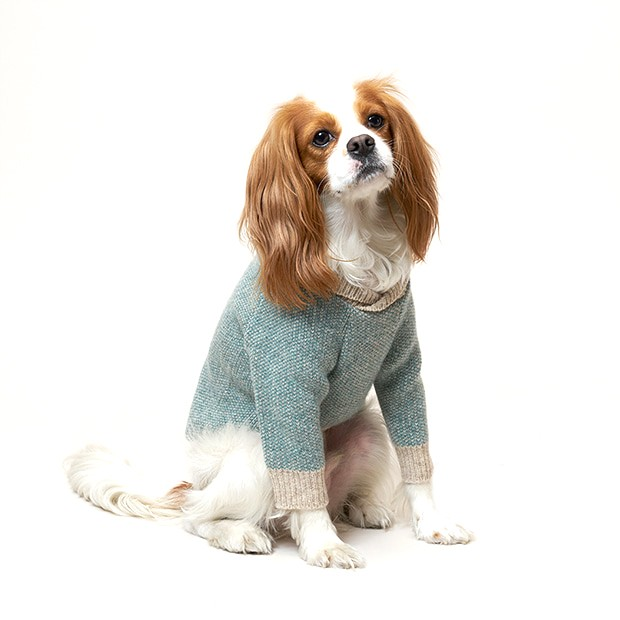 Dog Elegant Jumper
