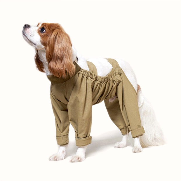 Dog Walking Suit