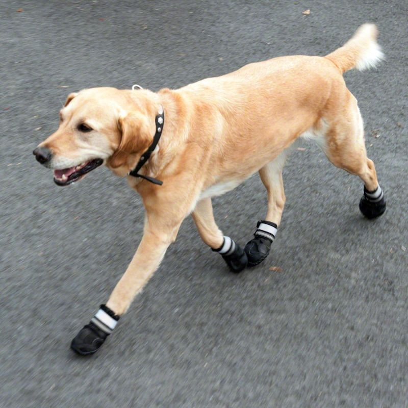 Puppy Boots / Shoes