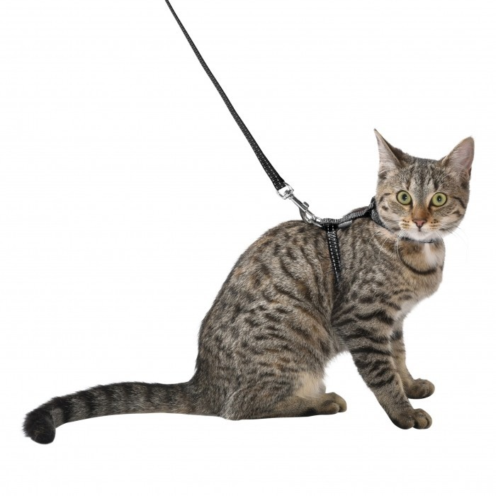 Black Collar and Leash for Kitten