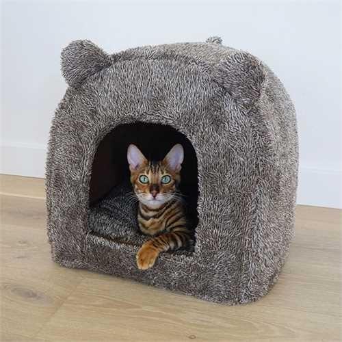 Teddy Bear Cat Bed
