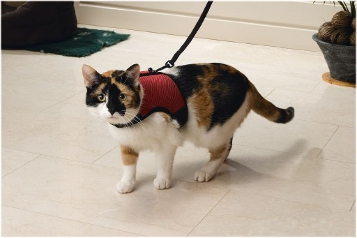 Red Cat Walking Harness