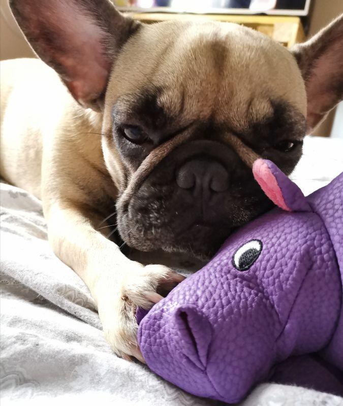 Sweet Hippo Toy