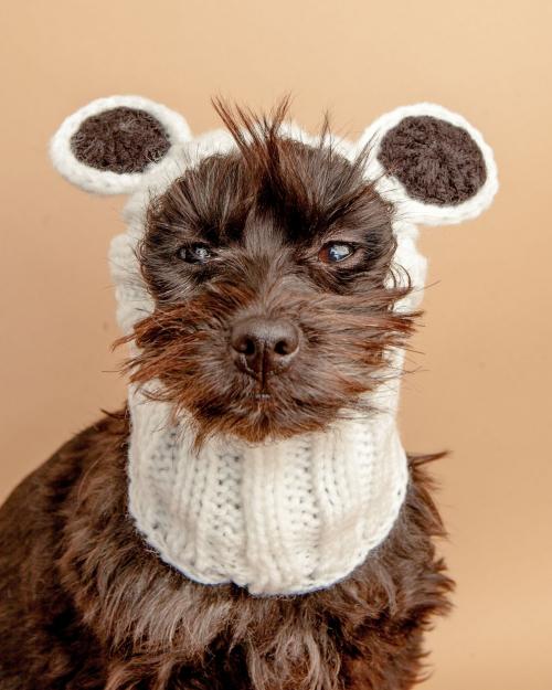 Cute Knit Panda Howloween Dog Snood