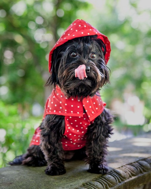 Adorable Dog Raincoat in Red