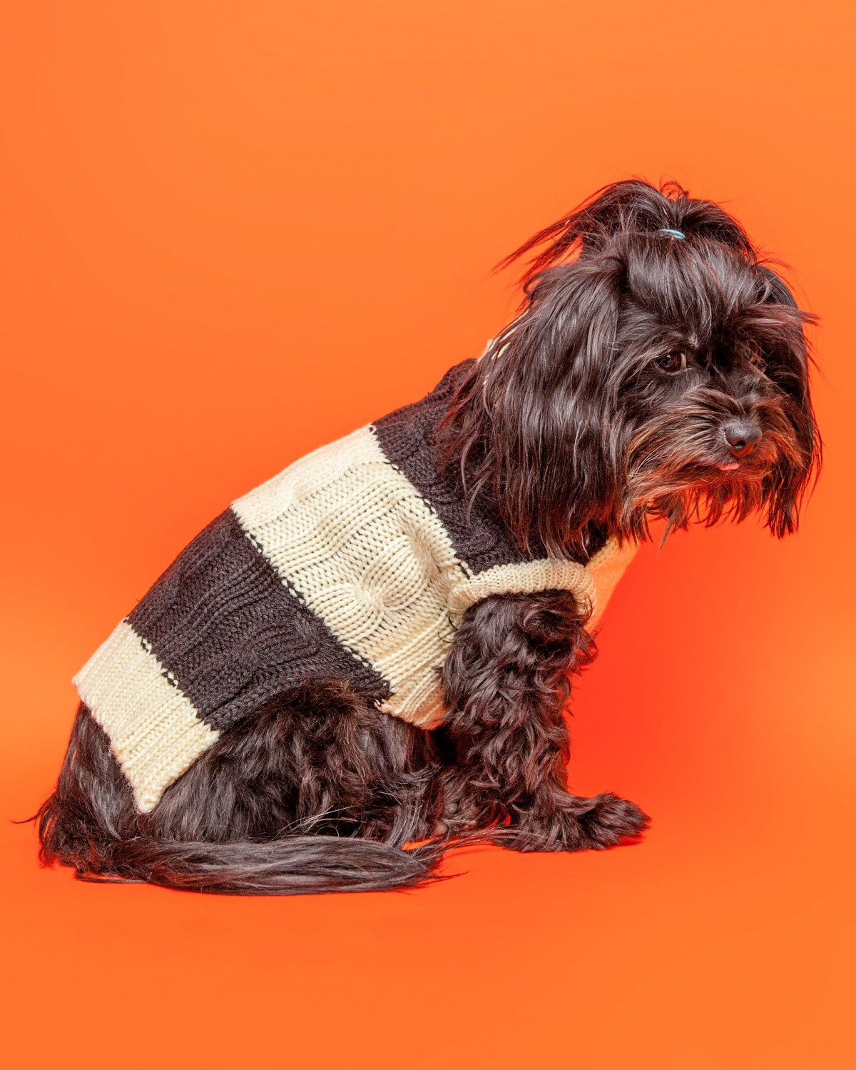 Cute Cable Striped Dog Sweater