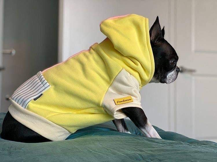Dog Hoodie in Banana Split