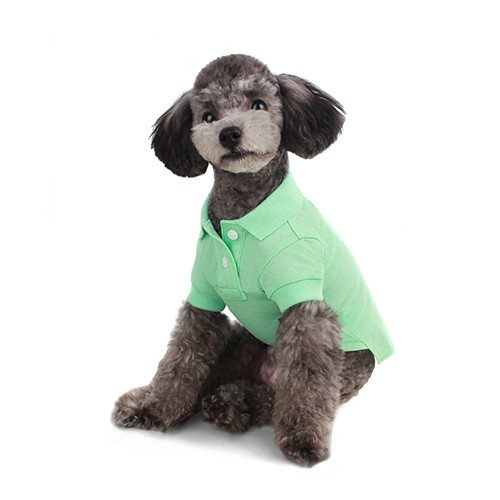 Beautiful Polo Shirt in Mint