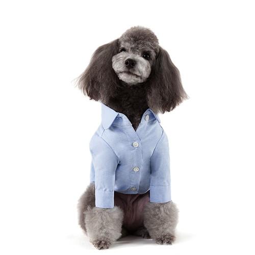 Cute Blue Solid Shirt