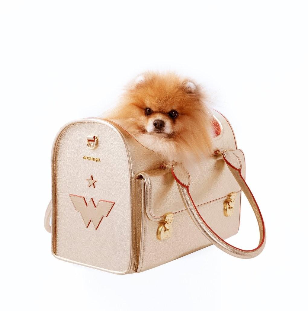 Golden Vessel of Wonder for Dogs
