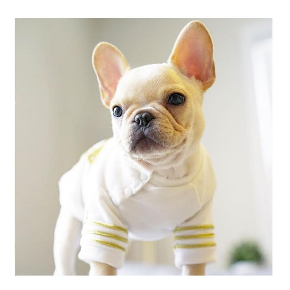 Fashionable Dog Sweatshirt