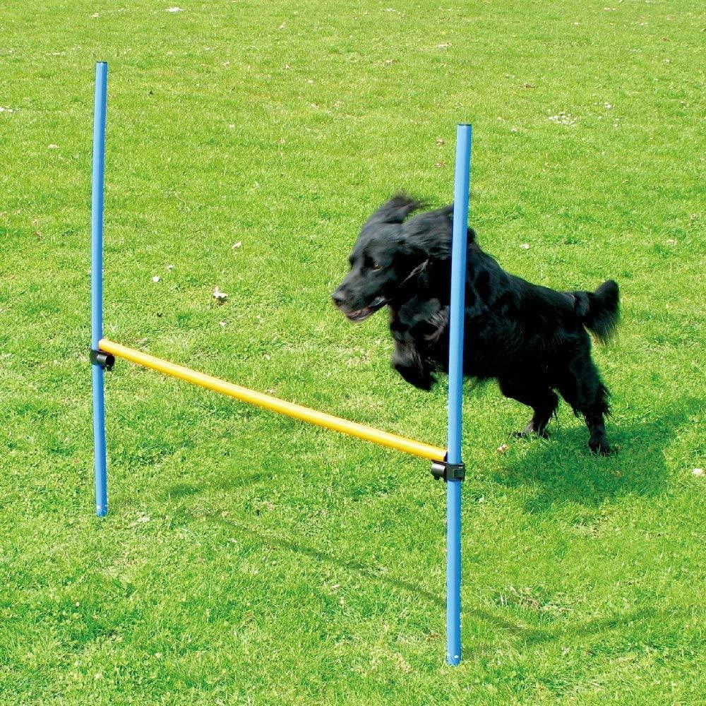 Funny Dogs Outdoor Game