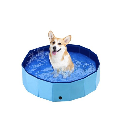 Safe Swimming Pool for Dogs
