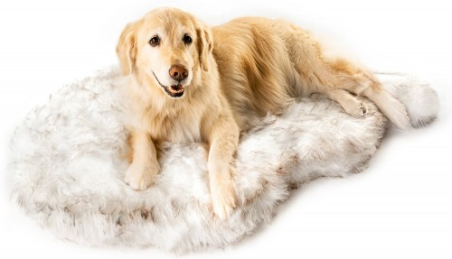 White Orthopedic Dog Bed with Removable Cover