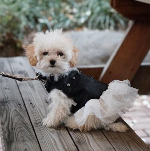 Adorable Denim Vest in Black&White